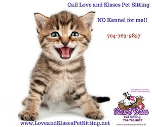 Pet Sitter in South Charlotte