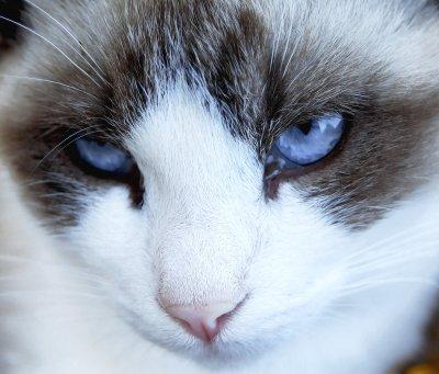 Is Cat Litter Dangerous When Pregnant