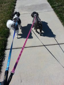 Bella and Oliver on walk
