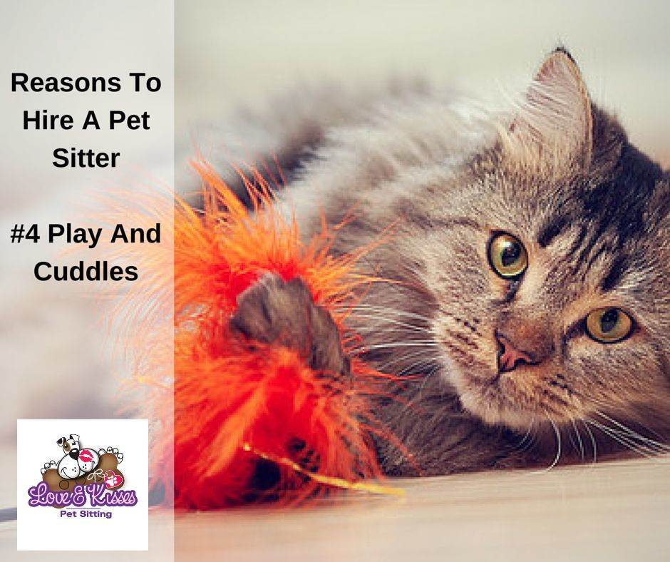 things a pet sitter does to make your life easier   pet
