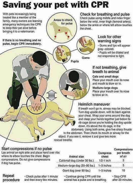 Indian Trail Pet Sitter Explains CPR for Dogs - Love and