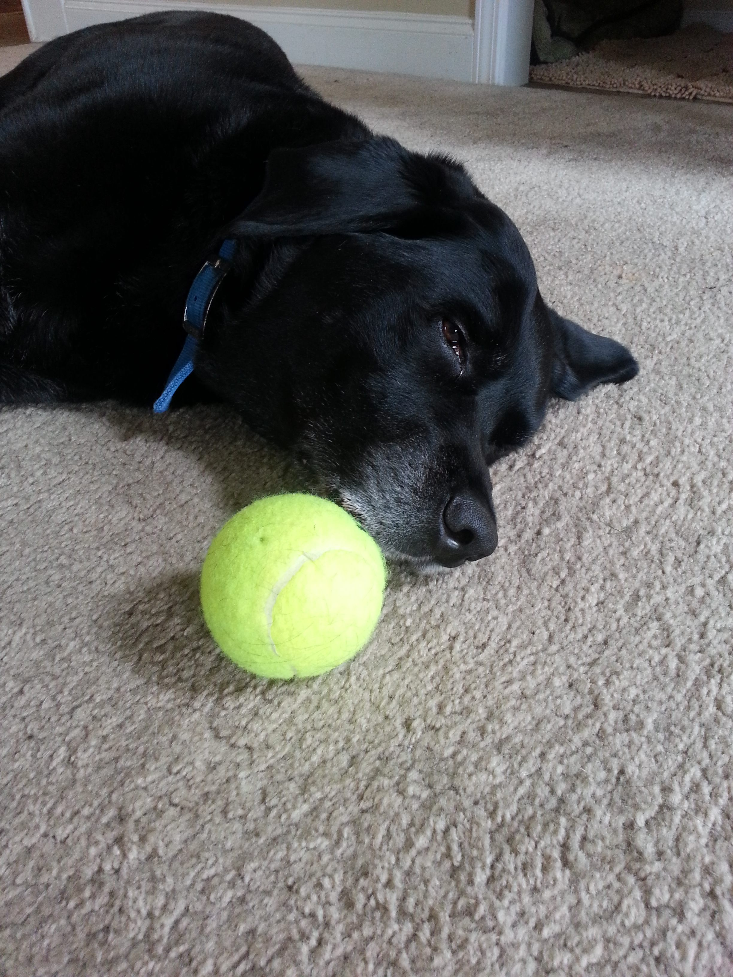 Buddy With Ball Love And Kisses Pet Sitting Indian Trail Nc