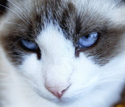 Cat Litter Cleaning Service Near Me