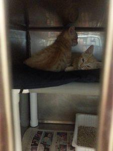 kitties in boarding kennel