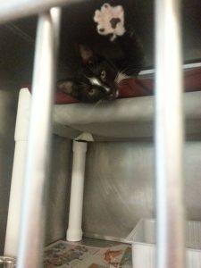 Cat in Boarding Kennel