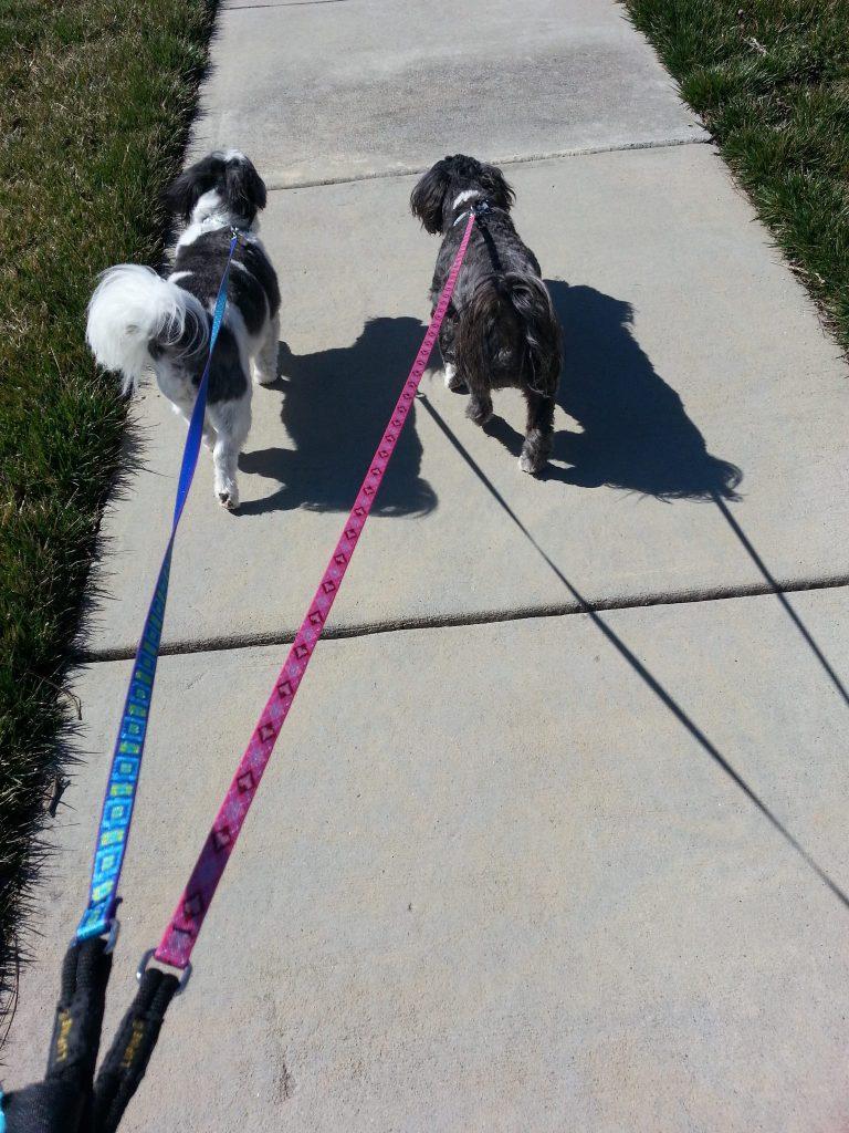 Bella and Oliver on walk