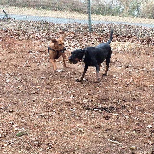 Waxhaw Dog Park