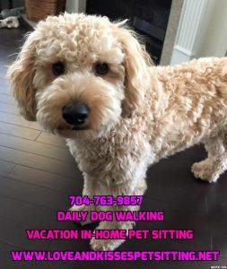 Pet Sitting in Monroe