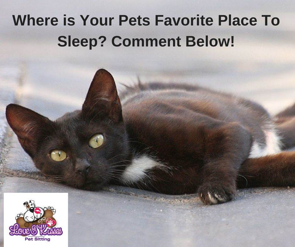 5 Reasons You Need A Pet Sitter For Your Cat Love And