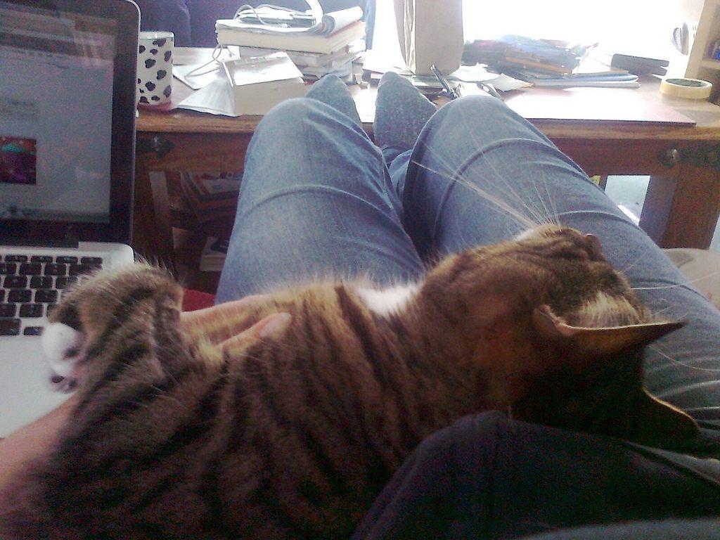 overgrooming in cats