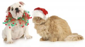 Pet-Friendly Holidays