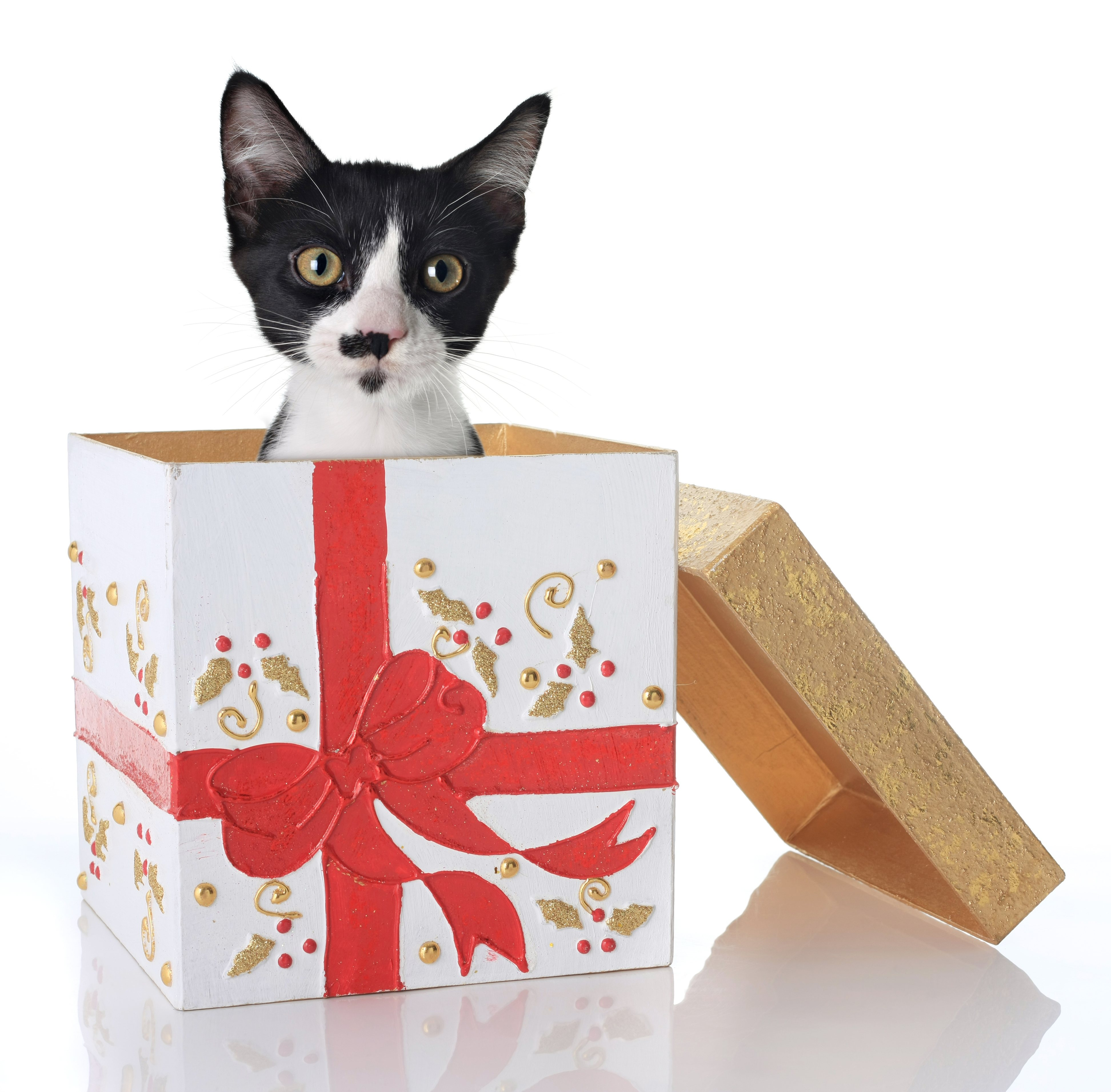 Should I Give a Pet for a Christmas Present?