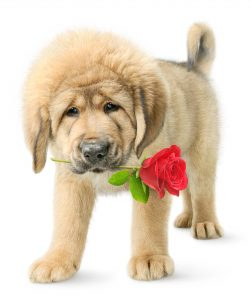 Valentine Dog Treats