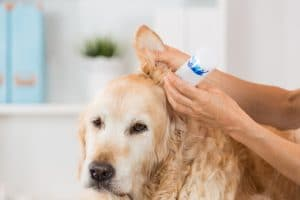 Know if Your Pet has Allergies