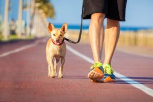 BENEFITS OF DAILY WALKING YOUR DOG